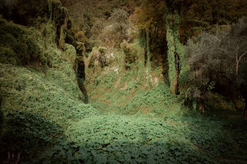 Botanica: perché gli artisti sono ossessionati dalle piante? Ph. Emanuele Maniscalco
