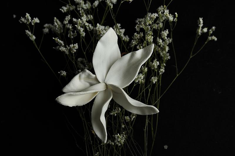 eventi-arte-venezia-botanica-silvia-coccaglio